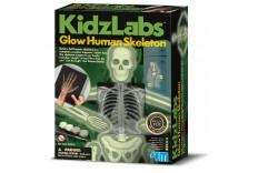 Kit Science du squelette humain